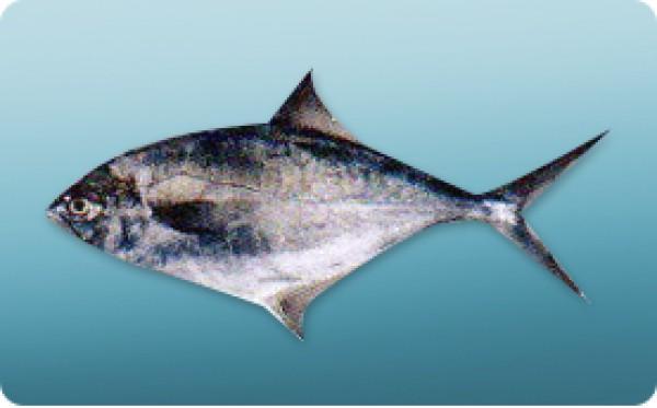 Altamar Group - Argentine Fish  amp  Shrimp